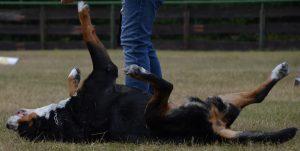 Hundesportverein DVG-Neuss Rheinallee e.V.